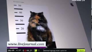 В Великобритании появился кот-клептоман