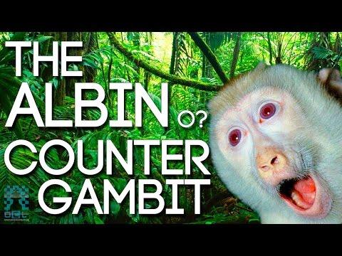 Tremendous pressure with The Albin Gambit! - IM Andrew Martin