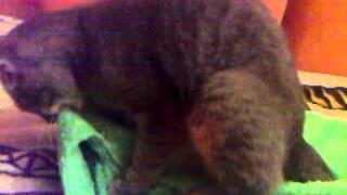 котик дрочит