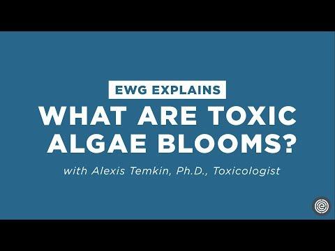 What Are Toxic Algae Blooms?