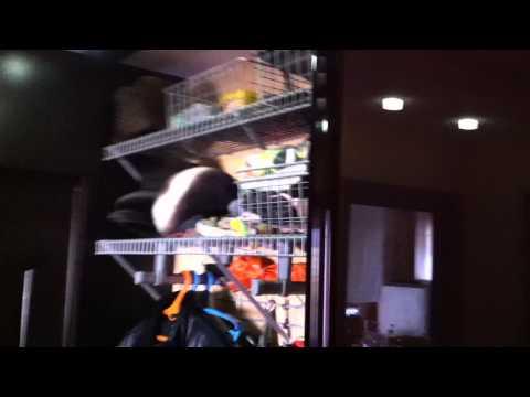 шкафы гардеробные чебоксары
