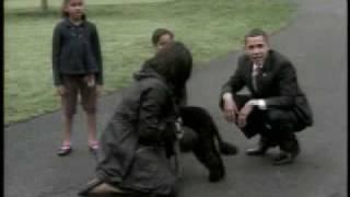Новый член президентской семьи  собака по кличке Бо