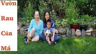 Vườn Rau & Hoa Sau Nhà Của Má Ở Canada