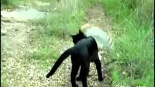 кот и сова-лучшие друзья