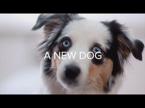 Dear Diary: A New Dog