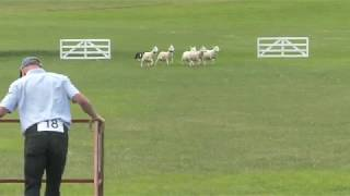 1st Day Welsh Nationals Sheepdog Trials 2018 - PM