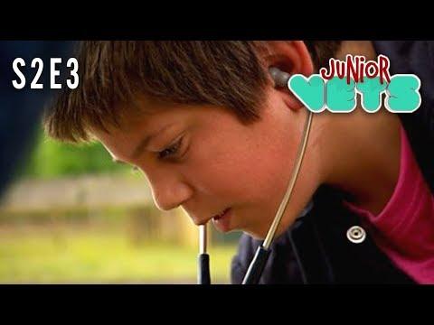 Junior Vets   S2E3