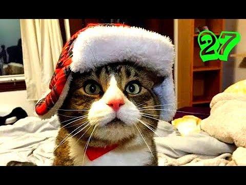 Просмотр видео о котах
