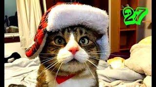 Коты и кошки 2017 Приколы с котами ТОПовое видео с котами и кошками Кот муар Коты жгут Смотреть коты