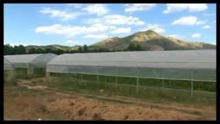 Cresce la produzione agricola abruzzese.
