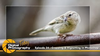 Episode 24 - Cropping and Vignetting on Photoshop [Digital Photography Today]