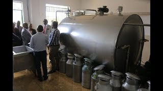 Mburugu society: Cutting off brokers who exploit dairy farmers – Part 1