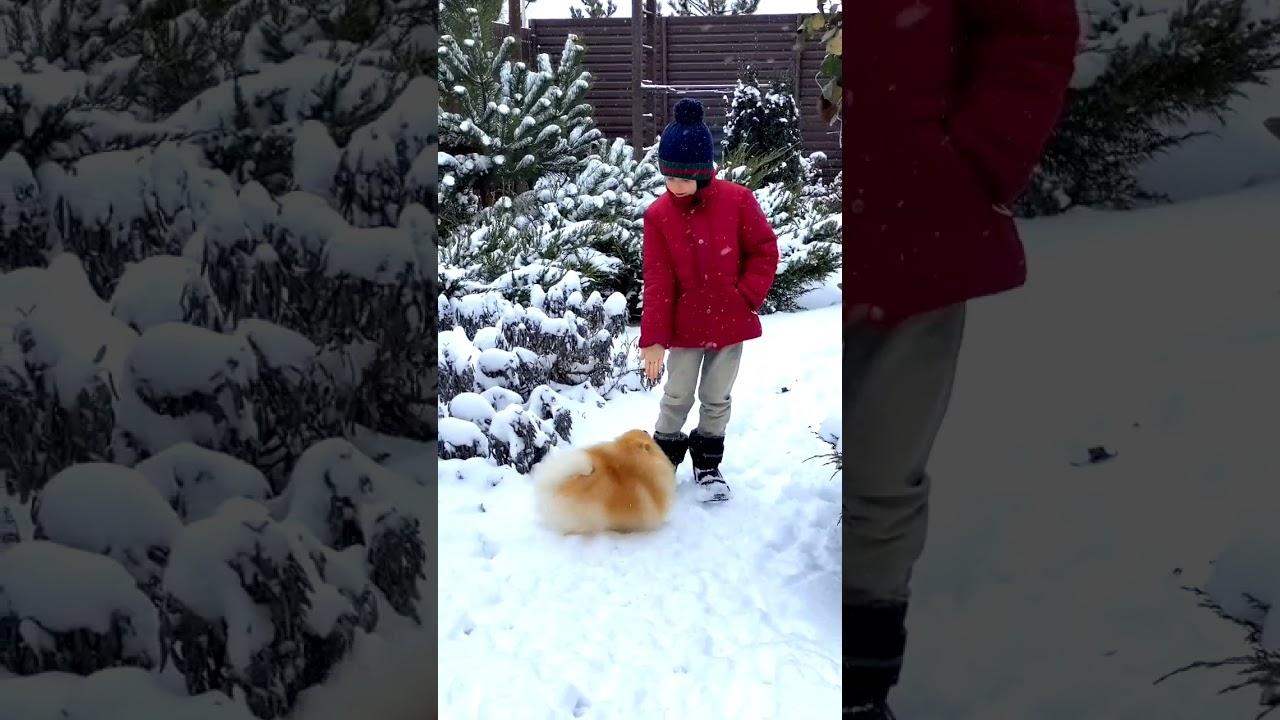 Cute Puppy || I Love My Puppy || Snowfall || Pet Animal || Entertainment || Nature || #Shorts