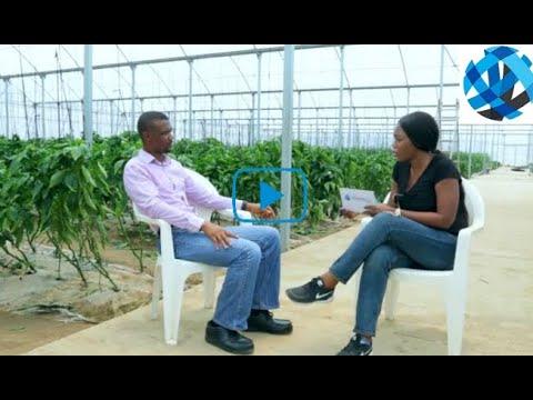Part II: Greenhouse Farming with Mr Tayo Ilori, MD of LATC Agro.