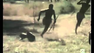 Pig hunting bushman style