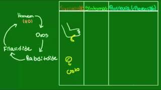 Ancilostomose - Parasitologia - Biologia