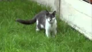 Коты атакуют!
