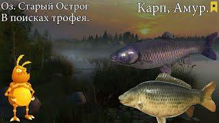 Острог Карп Амур В поисках трофея 1440p Русская рыбалка 4 Russian Fishing 4