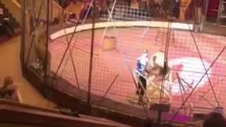 Лев в Луганском цирке напал на дрессировщика