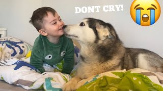 Husky Does Everything She Can To Make My Baby Feel Better! [CUTEST REACTION!!]