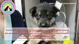 Донор для умирающего щенка с отлова Помогите спасти жизнь щенку Puppy is waiting for help
