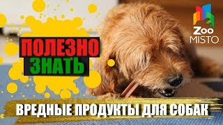 Полезно знать с ZooMISTO | Вредные продукты для собак