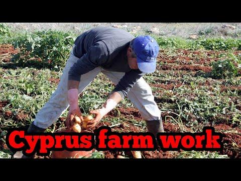Cyprus farm work visa 2018 || Cyprus visa||By Cyprus Live
