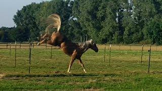 Конь-огонь !