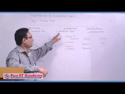 Fruit - NEET AIPMT AIIMS Botany Video Lecture [RAO IIT ACADEMY]