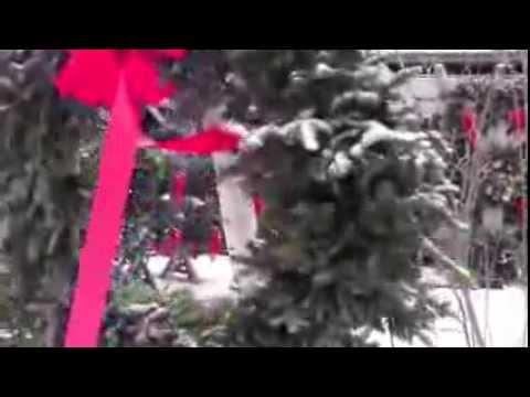Exceptional Stonewall Garden Center Christmas Trees