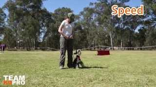 Team K9 Pro: Obedience In Drive