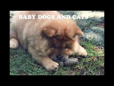 36. Pet care pet insurance | Pet boarding | Pet daycare | Boarding for dogs