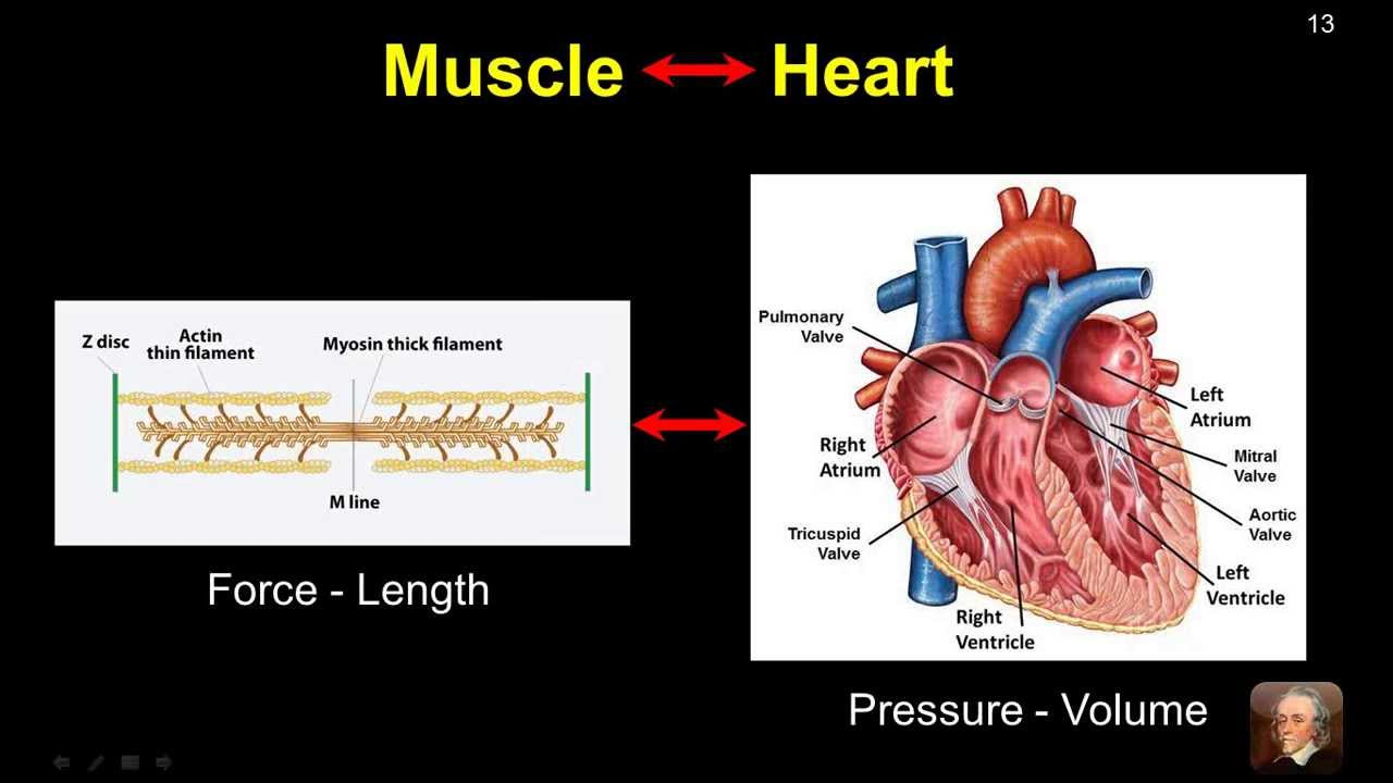basic hemodynamic principles viewed through pressure