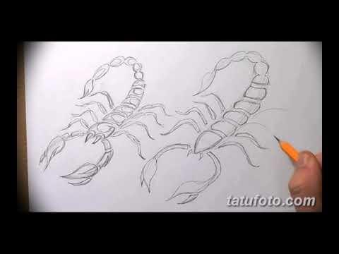 Эскизы тату скорпион - интересные примеры рисунков для татуировки скорпион