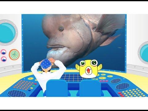 さかなクンと一緒に不思議な魚の世界へ!映画『さかなクン研究所 さかなの世界へレッツギョー!飛ぶ!闘う!踊る!編』予告編