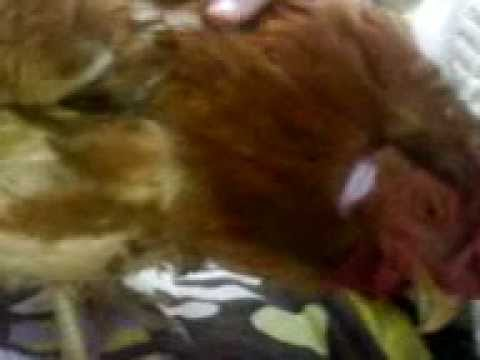 L'ultimo video del mio angioletto dorato: Isabella prende carezze e si intruffola sotto il maglione!