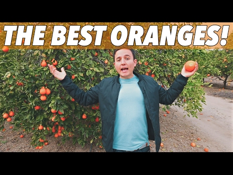 HOW ORANGE FARMS WORK | CALIFORNIA FARMING | It's Random 001