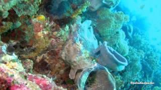 5 Objek Wisata Sulawesi Barat yang Paling Banyak Dikunjungi