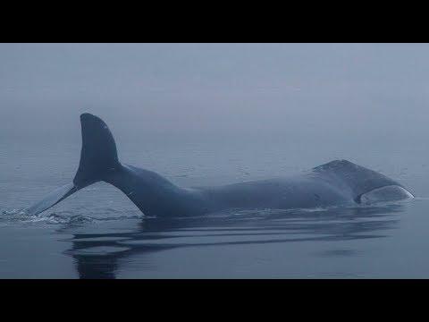 Уникальные кадры с Шантарских островов, о которых знает лишь малая часть жителей планеты