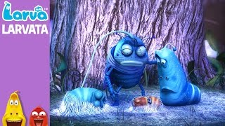 official larvatar - mini series from animation larva