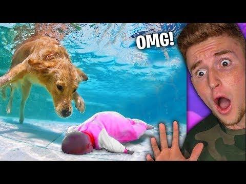 Cute Puppy SAVES Little Kids LIFE..