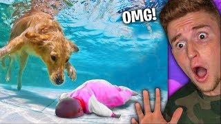 cute-puppy-saves-little-kids-life