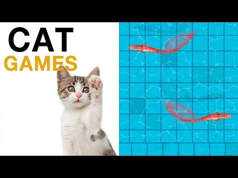 เกมส์แมว จับปลา  บนหน้าจอ สำหรับแมว แกล้งแมว