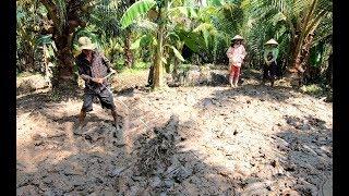 Cậu Bảy Trục bùn để trồng cỏ - Hương vị đồng quê - Bến Tre - Miền Tây