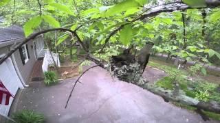 Macon bird watchers find a tiny hummingbird nest