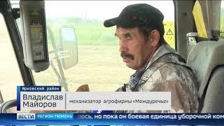 Более 35% зерновых и зернобобовых культур убрали в Тюменской области