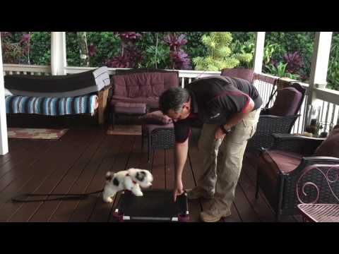 Puppy training with Chewy
