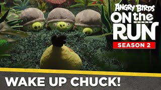 Angry Birds On The Run S2 | Wake Up Chuck! - Ep3
