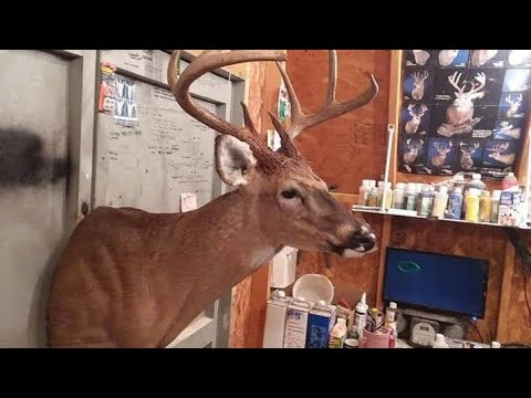 How To Mount A Deerhead From Start To Finish(Part 1)