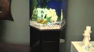 Clear For Life Hexagon Aquarium - Product Review Video